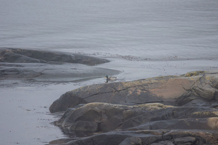 Animal Animal Themes Beauty In Nature Bird Day Fog Nature Nature No People Outdoors Seaside Sweden Water