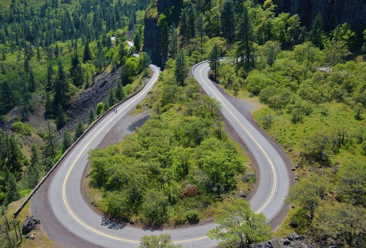 Curve Road Trees No People Rowena Crest Scenic Landscapes Scenics - Nature Spring