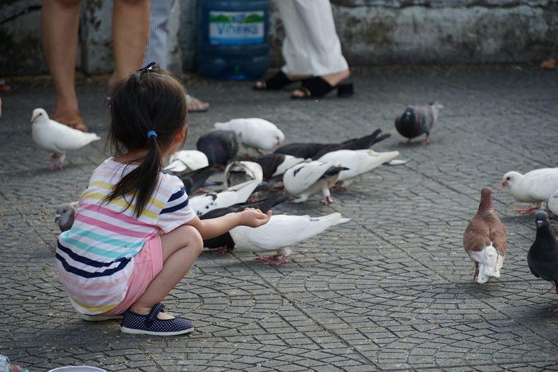 Kids Birds Park