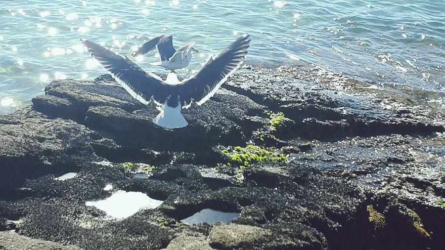 Praia de João Fernandes. Paisagem Rio De Janeiro Mar Beach Rio De Janeiro Sky Sea Buzios Opened Wings Bird Passaro EyeEmNewHere