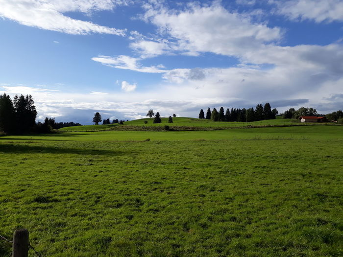 Agriculture Field Farm Rice Paddy Crop  Rice - Food Staple Landscape Cloud - Sky Nature Beauty In Nature Tree Sky Rice - Cereal Plant Rural Scene Outdoors Food Beauty Irrigation Equipment Freshness Cereal Plant Allgäuer Landschaft Allgäu Alps EyeEm Selects Freshness Clear Sky
