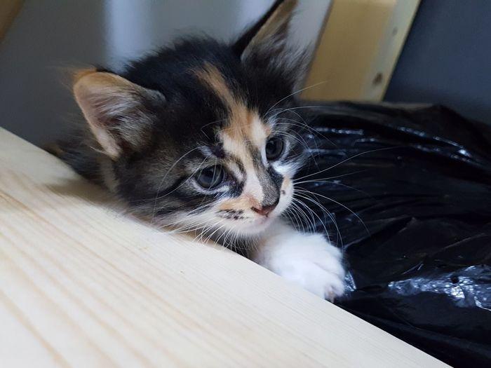 Cat Cats Pet Animal Pets Kitten Feline Domestic Cat Domestic Room Domestic Life Whisker Cute Close-up