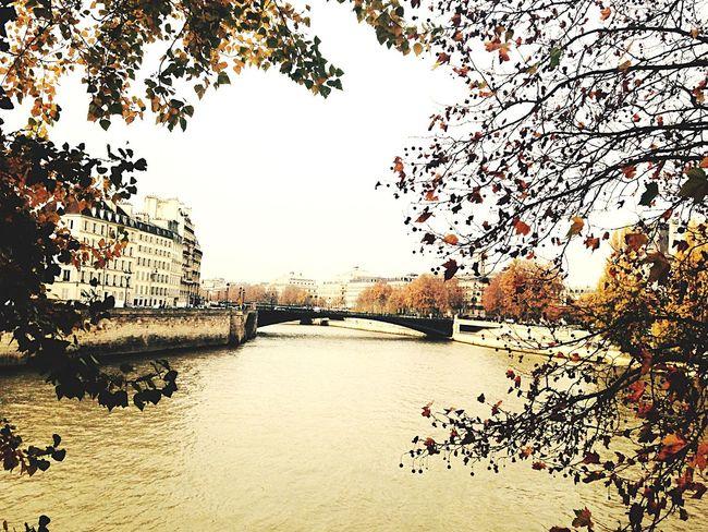 Paris France Bridge Fall Colors