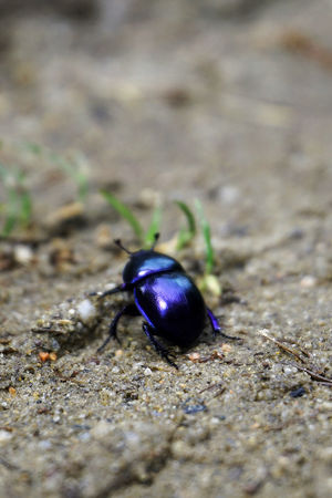 Animal Themes Animals In The Wild Bug Insect Nature One Animal Outdoors Violet The Great Outdoors - 2017 EyeEm Awards