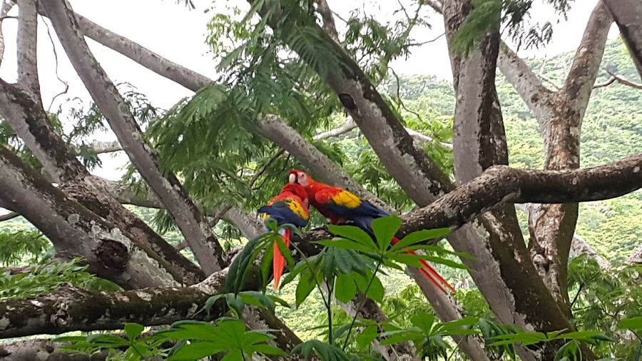 Tree Tree Trunk Growth Branch Leaf Nature Tranquility Beauty In Nature Solitude Green Scenics Plant Tranquil Scene Day Non-urban Scene Growing Remote Lapas Macaw Birds Bird Photography Lush Foliage Outdoors Botany Sky