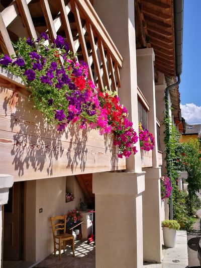 Flower Architecture Outdoors Day No People Building Exterior Nature Window Box