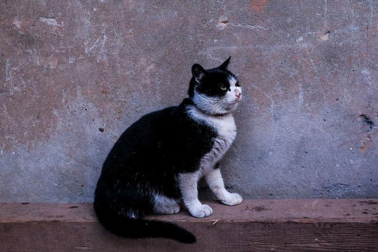 仰望星空的猫咪 looking