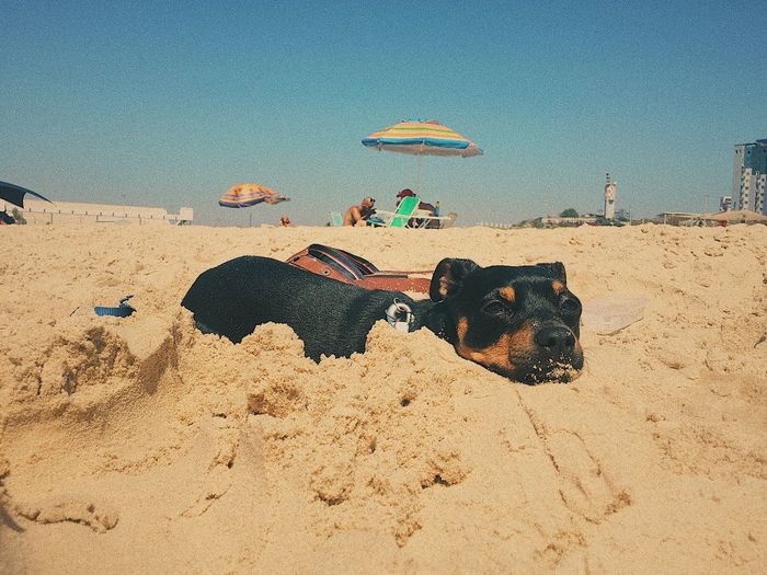 Sand Beach Dog Pets Animal Themes Day Domestic Animals Outdoors Summer Sea Vacations Sky Sunlight Nature Mammal Sand Dune Sitting No People Sand Pail And Shovel EyeEmNewHere The Week On EyeEm Pet Portraits Pet Portraits