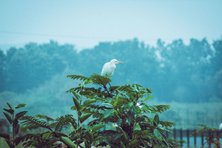 Bird perching on tree against sky