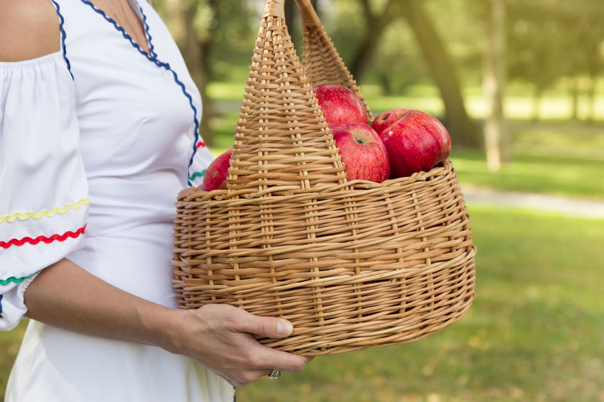 woman holding a harvest of red apples in a wicker basket Agriculture Apple Bio Diet Eco Family Farm Gardener Rustic Vegetarian Apples Basket Food Fresh Garden Girl Harvest Healthy Eating Healthy Food Organic Picking Red Apple Ripe Straw Vegan Juicy Organic Farm Homegrown Produce Harvesting Cultivated Land