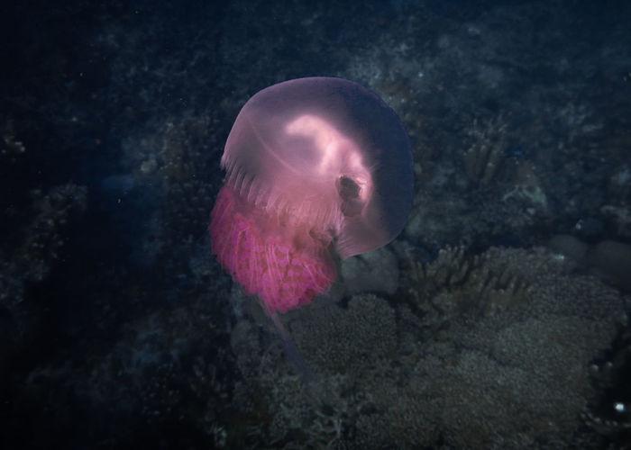 Close-up of jellyfish swimming underwater