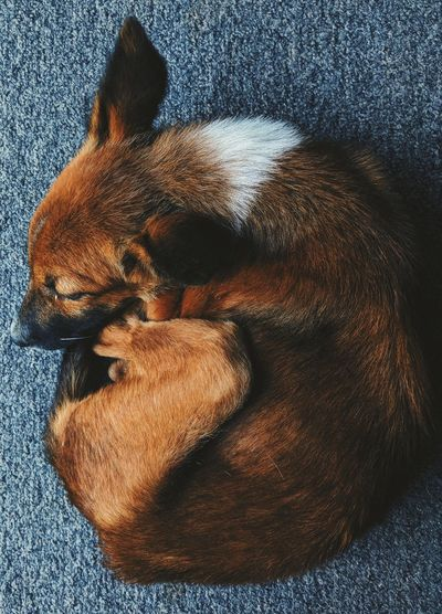 Womb Sleeping Puppy Pets Low Section Dog Relaxation High Angle View Close-up Animal Leg At Home Animal Limb Adult Animal Doormat Vertebrate Swimming Animal Domestic Cat Pampered Pets Home Spider Animal Face Snout Web Feline Cat Carpet Whisker Rug Tabby Paw