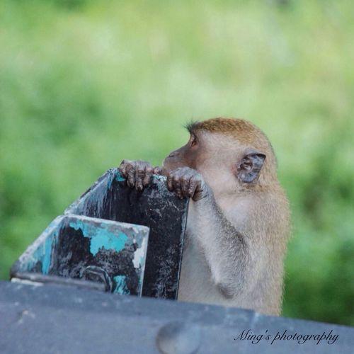 Monkey of the day Photography Photo Phootoftheday