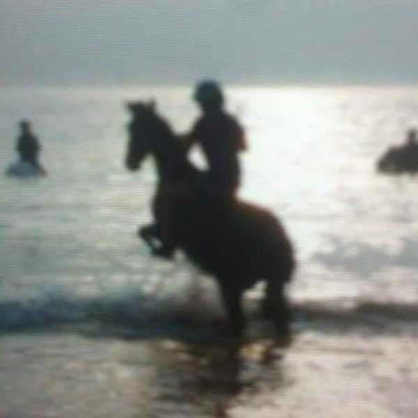 Adventure Check This Out Getting Away From It All Hobbies Horsejumping Jumpingwave Pets Prorider Swimming