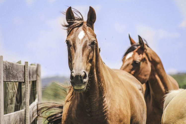Three Horses Standing In Farm