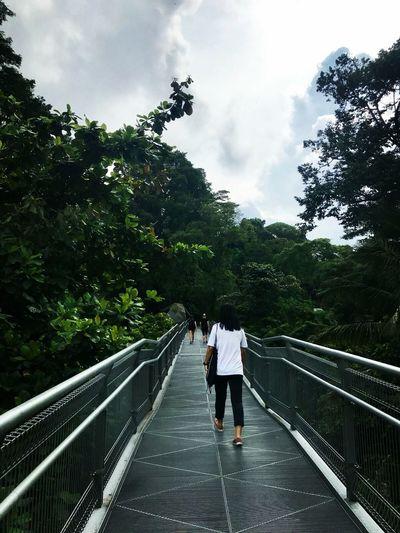 why u will never walk alone Hiker Tree Full Length Footbridge Bonding Bridge - Man Made Structure Railing Standing Suspension Bridge Engineering Cable-stayed Bridge EyeEmNewHere
