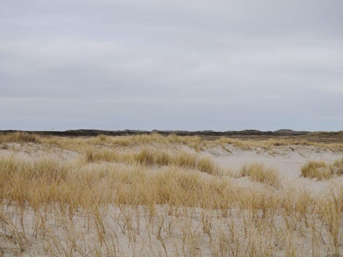 Dünenlandschaft Sylt, Germany Northsea Ellenbogen, Sylt Water Beach Sand Dune Marsh Sky Grass Landscape Marram Grass Tide Coast