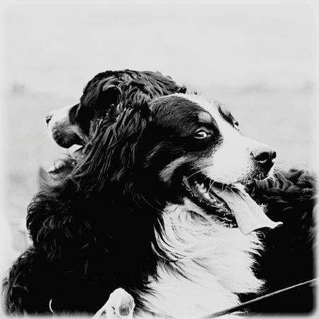 Canon 70d EyeEm The Best Shots My Unique Style Moment Lens 75 -300mm Black & White DogLove Dog