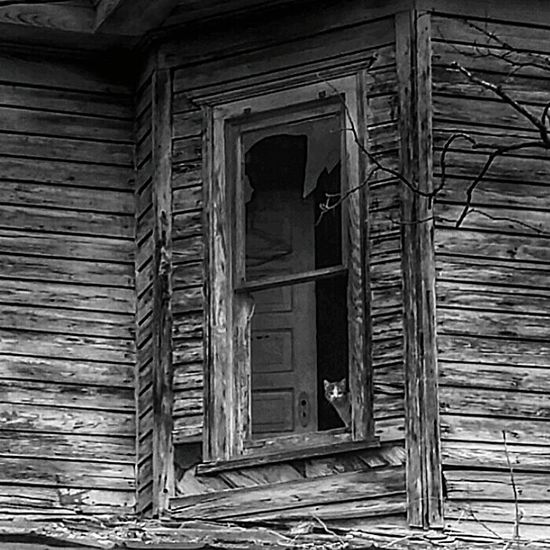 The cat in the window of an abandoned home...phenomenon Shades Of Grey EyeEm Abandoned EE_Daily: Black And White Abandoned Abandoned Captures Abandoned House EyeEm Best Shots - Black + White Check This Out Bnw_planet Grime The Secret Spaces