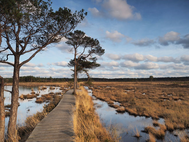 Elstead Boardwalk at Thursley Common, Surrey, UK Agriculture Cloud - Sky Clouds Day Elstead Boardwalk Elstead Moat Landscape Nature Nature Reserve No People Outdoors Reflection Scenics Sky Sunset Surrey Surrey Countryside Surrey England Thursley Common Tree Trees And Sky Water