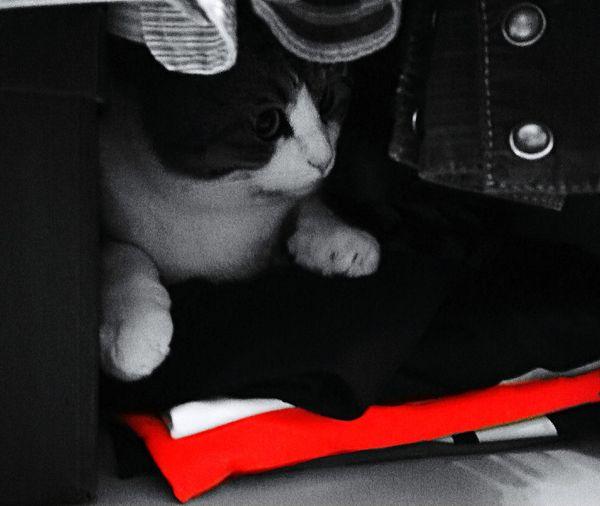 Cat Cat♡ Cat Lovers Catsofinstagram Catoftheday That's Me Cheese! Relaxing Surprise! Surprise Discovered Orange Color Orange Cat Gatti Gatti Negli Armadi Pets