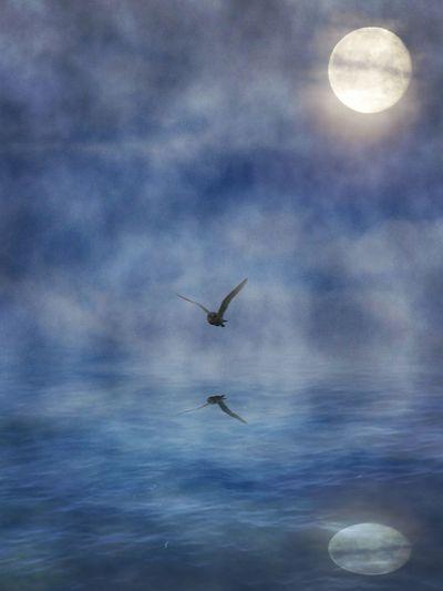 Flying One Animal Cloud - Sky Freedom Sea Moon No People Owl Moon Owl Over Water Owl Art Nature On Your Doorstep Bird