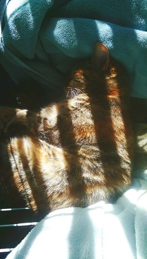 Catlove Purrfect Catnap Secretspot Kittycat PrettyMomma Mybaby That's Pretty Momma hiding out in my basket
