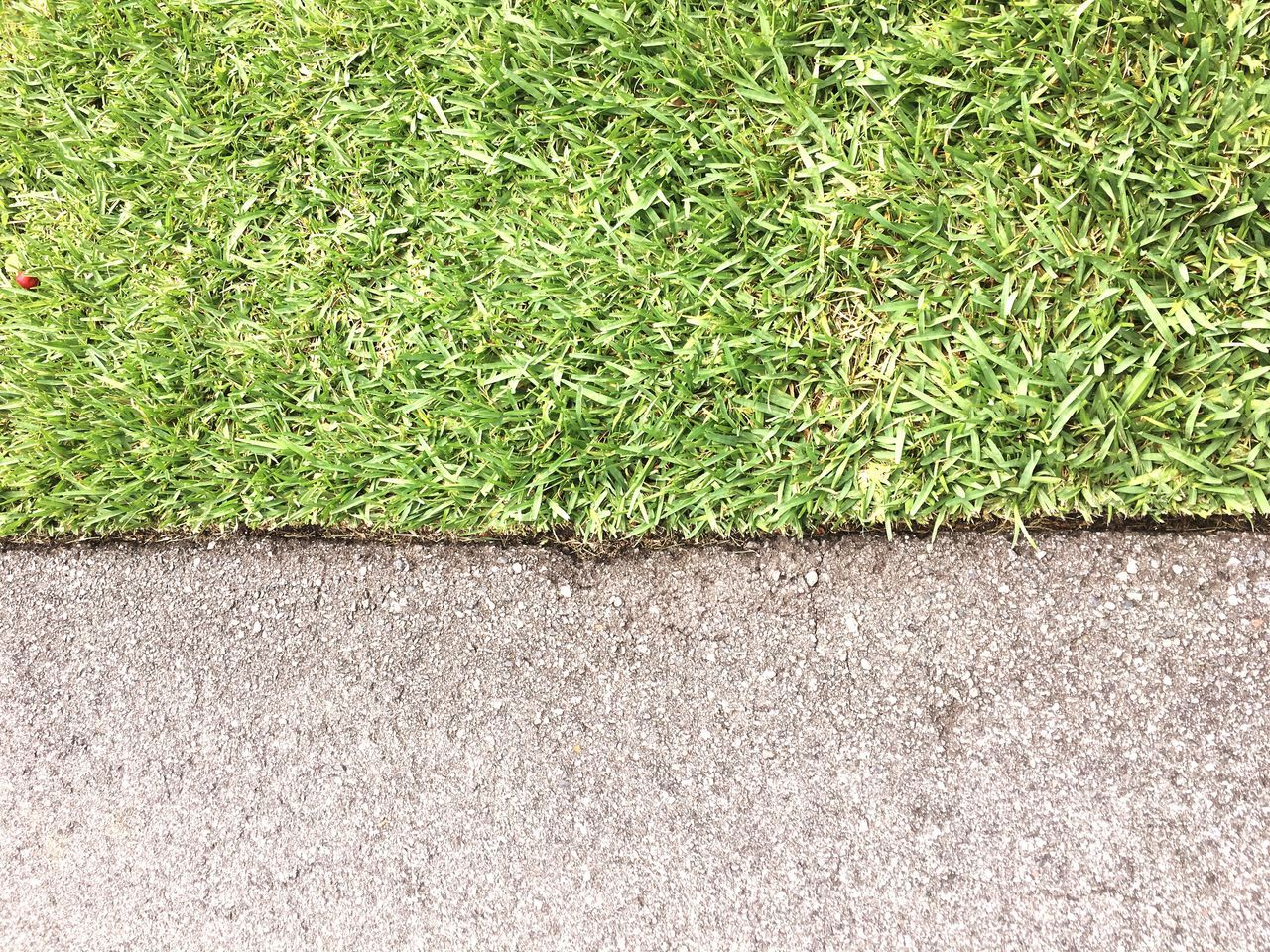 grass, green color, no people, plant, day, outdoors, growth, nature, close-up