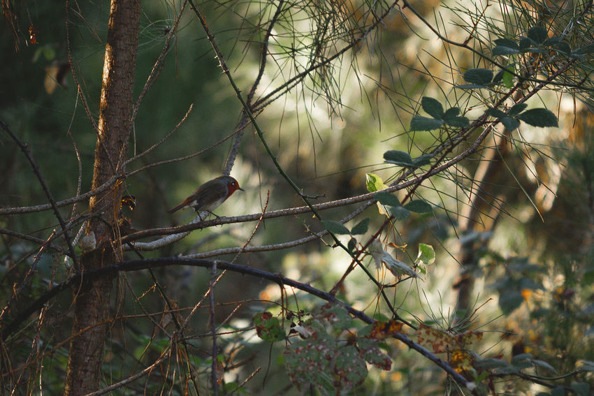 Bird Tree Bird Plant Animals In The Wild Animal Wildlife Animal Animal Themes Vertebrate Branch Perching Nature One Animal Selective Focus No People Day Outdoors Forest Land Focus On Foreground Growth