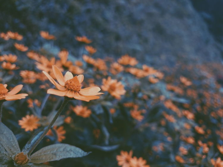 Flower Growth Fragility Nature Beauty In Nature Plant Close-up Leaf Day No People Outdoors Autumn Flower Head Freshness Forest Color Of Life! Autumn Adventures Summer Views Asian Culture Art Is Everywhere Vietnam EyeEmNewHere EyeEm Best Shots EyeEm Nature Lover