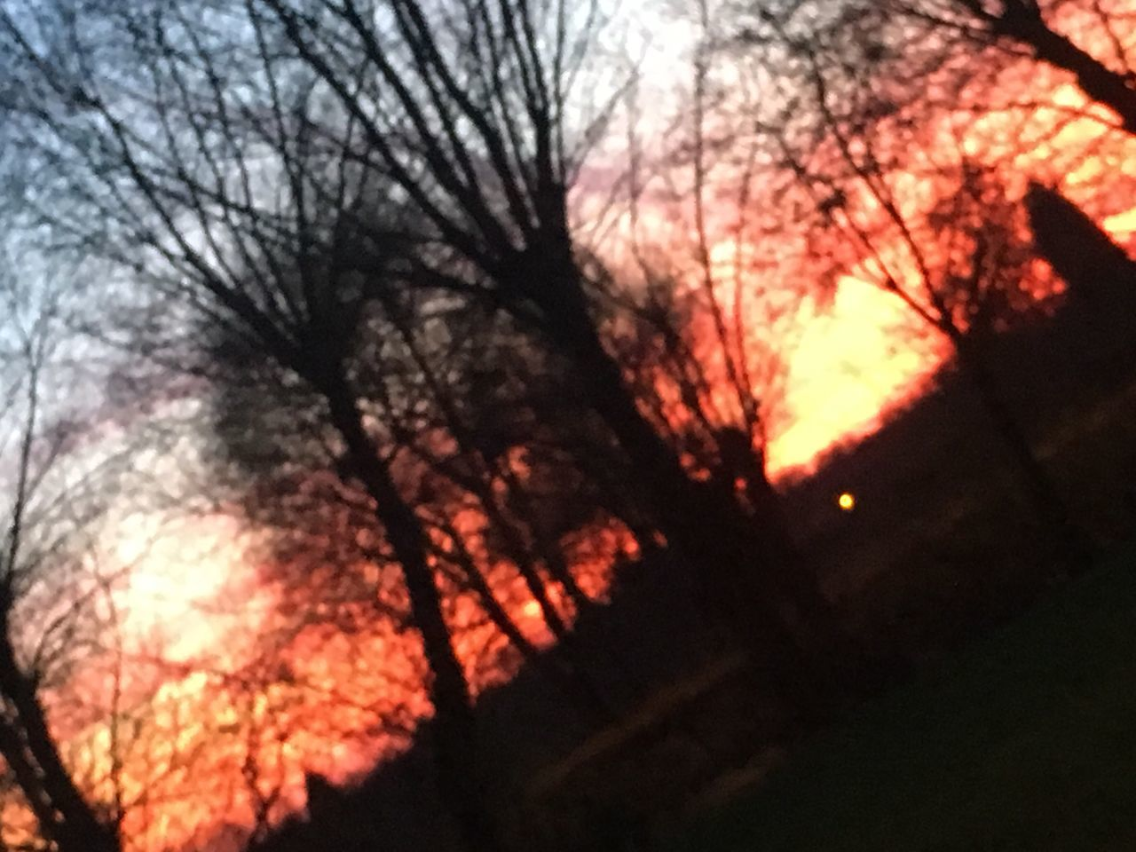 bare tree, tree, branch, sunset, no people, low angle view, nature, outdoors, close-up, beauty in nature, sky, day