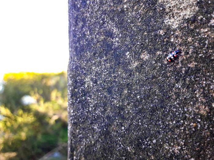 Mariquita 🐞 Mariquita Mariquita♥ Insecto Natura Nature Tree Field Close-up Sky Grass
