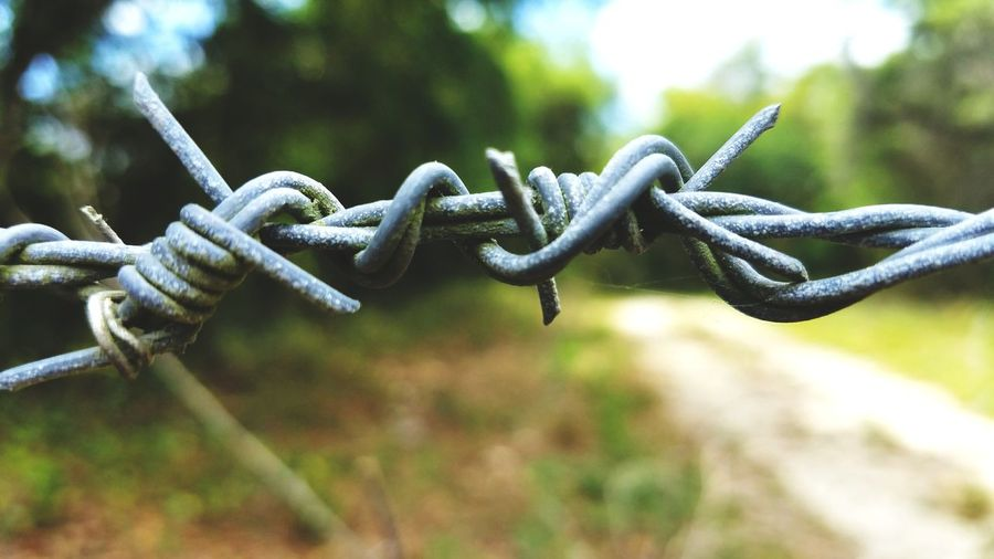 Close-up of barbed wire fence against trees