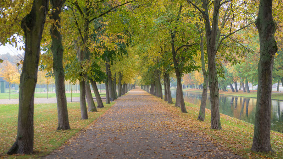 Autumn in city park Tree Plant Autumn Direction The Way Forward Nature Tranquility Park Treelined Beauty In Nature Footpath Scenics - Nature No People Park - Man Made Space Diminishing Perspective Day Leaf vanishing point Tranquil Scene Plant Part Change Outdoors