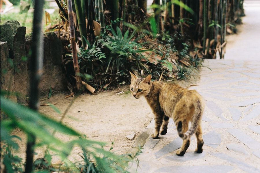 Domestic Cat Animal Themes One Animal Feline Mammal Cat Domestic Animals Pets Outdoors Plant Day No People Sitting Nature Ae-1 Film Canon canon