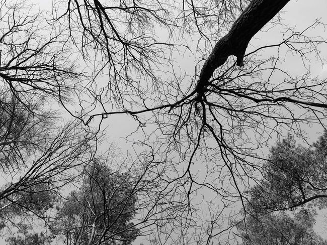 Black And White Blackandwhite Nature Photography Naturelovers Nature Nature_collection Beauty In Nature Waldspaziergang Wald Forrestmagic Forrest Nature Forrest Photography Forrest Trees And Sky Tree_collection  TreePorn Tree Silhouette Bare Tree Branch Tree Nature Low Angle View Beauty In Nature Outdoors No People Day Tree Trunk Scenics Sky Forest