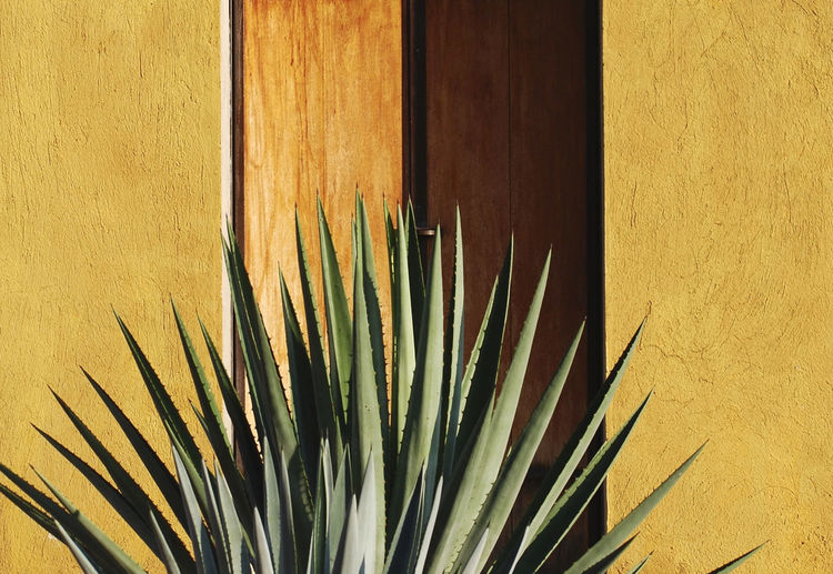 Succulent Mexico Mexico City Plant Plants Succulents Botanical Garden Gardens Puerto Vallarta Succulent Succulent Plant