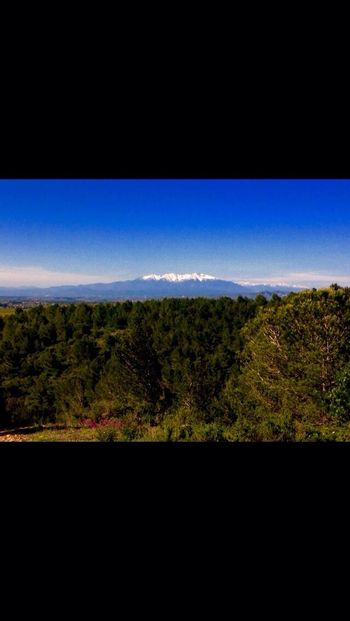 Canigou Mountain Tranquility Landscape Nature Flower Snow Hiking Sun SouthFrance Serenity Happiness Freedom Tree Horizon