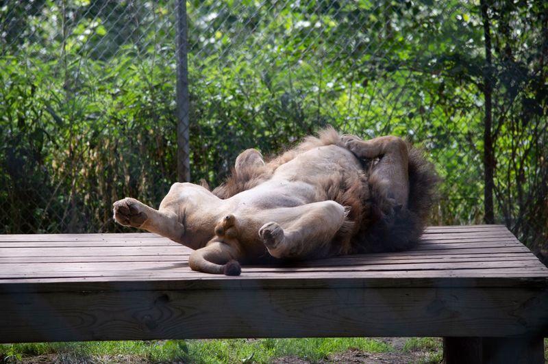 View of an animal sleeping on bench