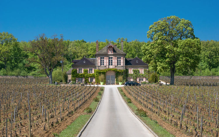 My House Buddy Architecture Aristocats Building Exterior Built Structure Burgundy Castle Clear Sky Farm Farm Life Farmland France Historic House Nature Nature Outdoors Rural Scene Tree Tree Wine Moments Winery Wood