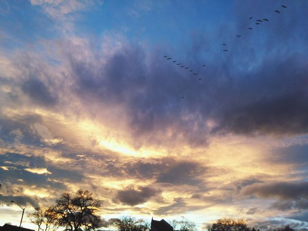 Cloud_collection  Sunset_collection Geese Migration Geese In Flight
