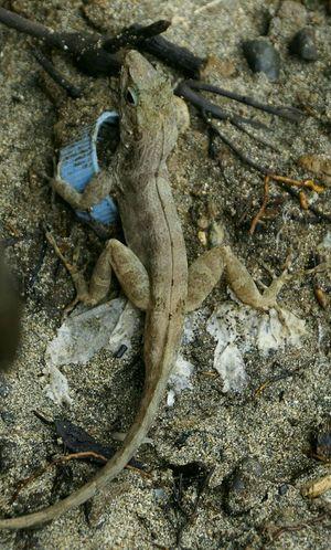Littlefriend Mylittlefriend Gecko Taking Photos Check This Out Wildlife Geckos Animals Reptiles Beach Life