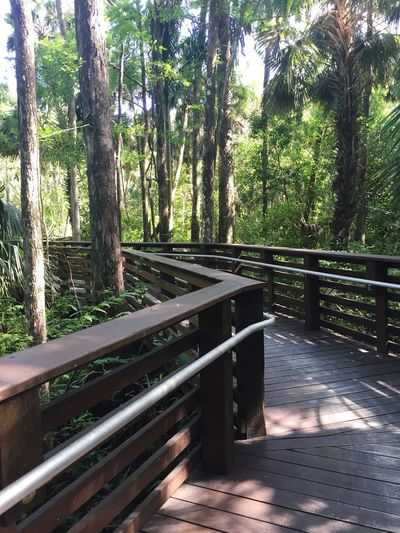 Hiking Walkway Path Plant Tree Nature Growth Sunlight No People Day Green Color Forest Tree Trunk Beauty In Nature Outdoors Park Railing Tranquil Scene