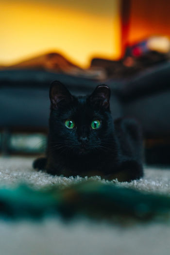 Pets Mammal One Animal Indoors  No People Cat Cats Cats Of EyeEm Kitten Kitty Black Cat Black Home Home Interior Playing Young Sunset Golden Hour Profile Feline Portrait Domestic Cat Looking At Camera Black Color Whisker