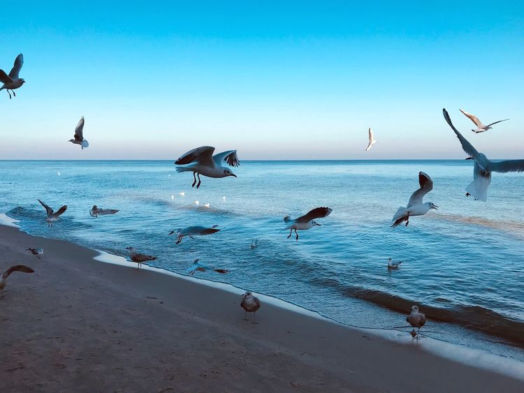 Water Sea Beach Bird Group Of Animals Sky Horizon Beauty In Nature Seagull First Eyeem Photo
