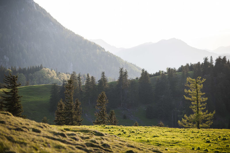 Beauty In Nature Calm, Rest, Quiet, Peace, Silence, Tranquility Day Grass Green Color Growth Landscape Mountains Natur Nature Nature Nature_collection No People Non-urban Scene Outdoors Remote Scenics Schneeberg, Austria Sky Tranquil Scene Tranquility