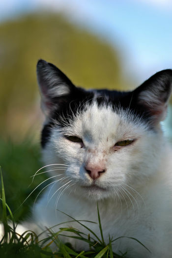 Close-up of cat sitting on grass