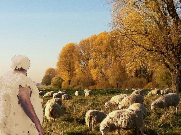 Schafe :-) Sheep Sheeps Nature Photography Beautiful Nature Animals Tiere Wolle  Togetherness Fun