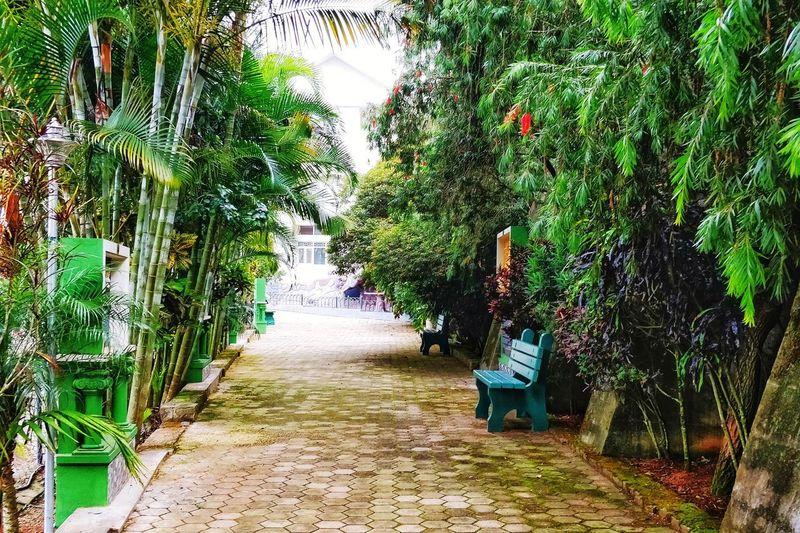 Walkway Tree Walkway Pathway Narrow Alley Long Bamboo - Plant Bamboo Grove Growing Countryside Treelined Lane