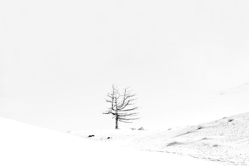 Area Etna! Snow Winter No People Nature Landscape Tree Tranquility Travel Photography Conceptual Photography  Eyem Gallery Backgrounds Adventure Travel Eyem Best Shots Conceptual Photography  Etna Volcano Environmental Science  Lava Etna, Mountain, Sicily, Sicilyphotography Etnavolcano Etnasud Fog Fog In The Trees Perspectives On Nature